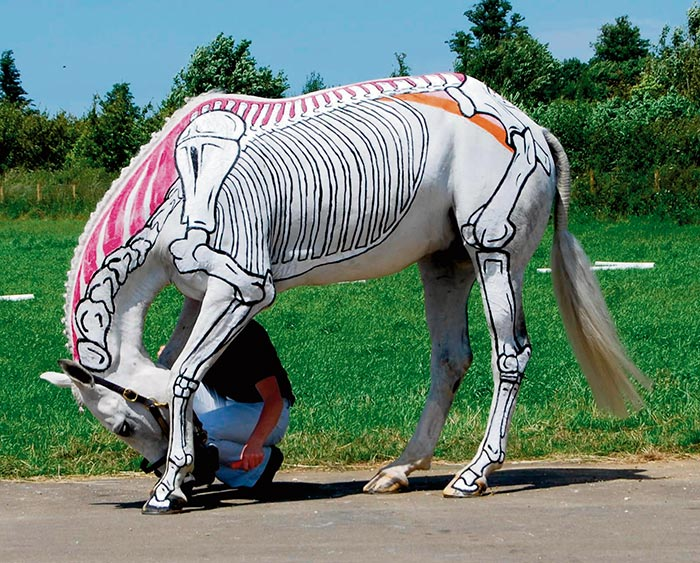 Horses Inside Out – The Anatomy of Muscles   Equi-Ads Magazine