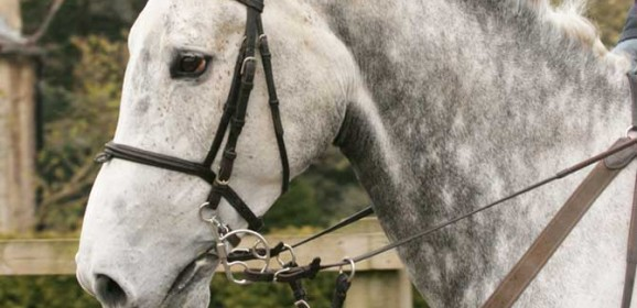 Bitting concepts and how bitting horses has changed