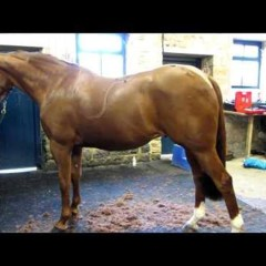 How To Clip a Horse With Clare Blaskey