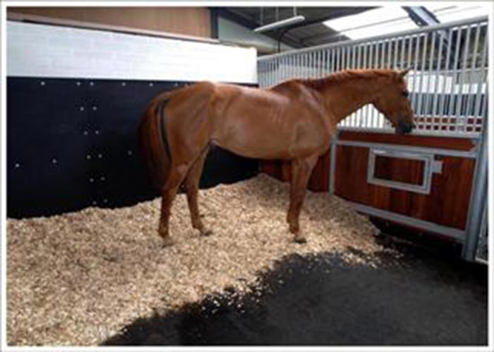 Healthy-Stables---equiads