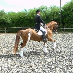 Dressage rider Roger Gregory joins Blue Chip's sponsored riders.