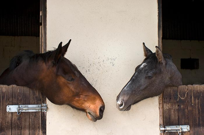 StablePhoto