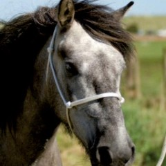 Veterinary Physiotherapy – Optimising Equine Performance