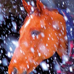 Common Winter Ailments – the winter can be a miserable time for horses!