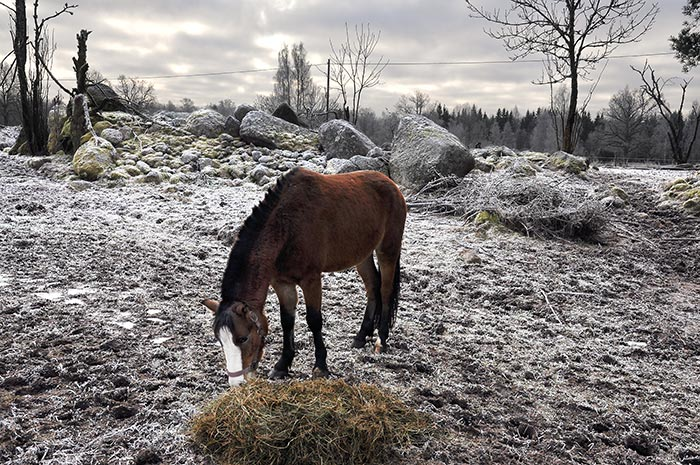 horse_on_frosty_ground_66790423
