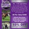 Equine stunt experience – 5 day holiday – discount for Equi-Ads readers