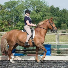 Helper required – Anne Wilson, Classical Riding Trainer and Author