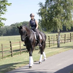 Caring for Your Stallion- With Lara Dyson