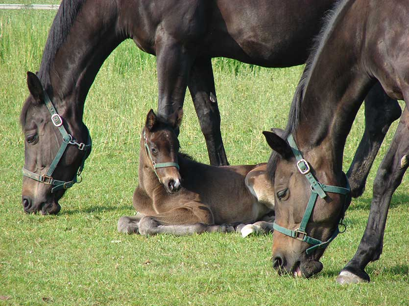 Magnesium supplementation reduces the prevalence of osteochondrosis in foals.