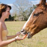 Treats for your horse: the good and the bad!