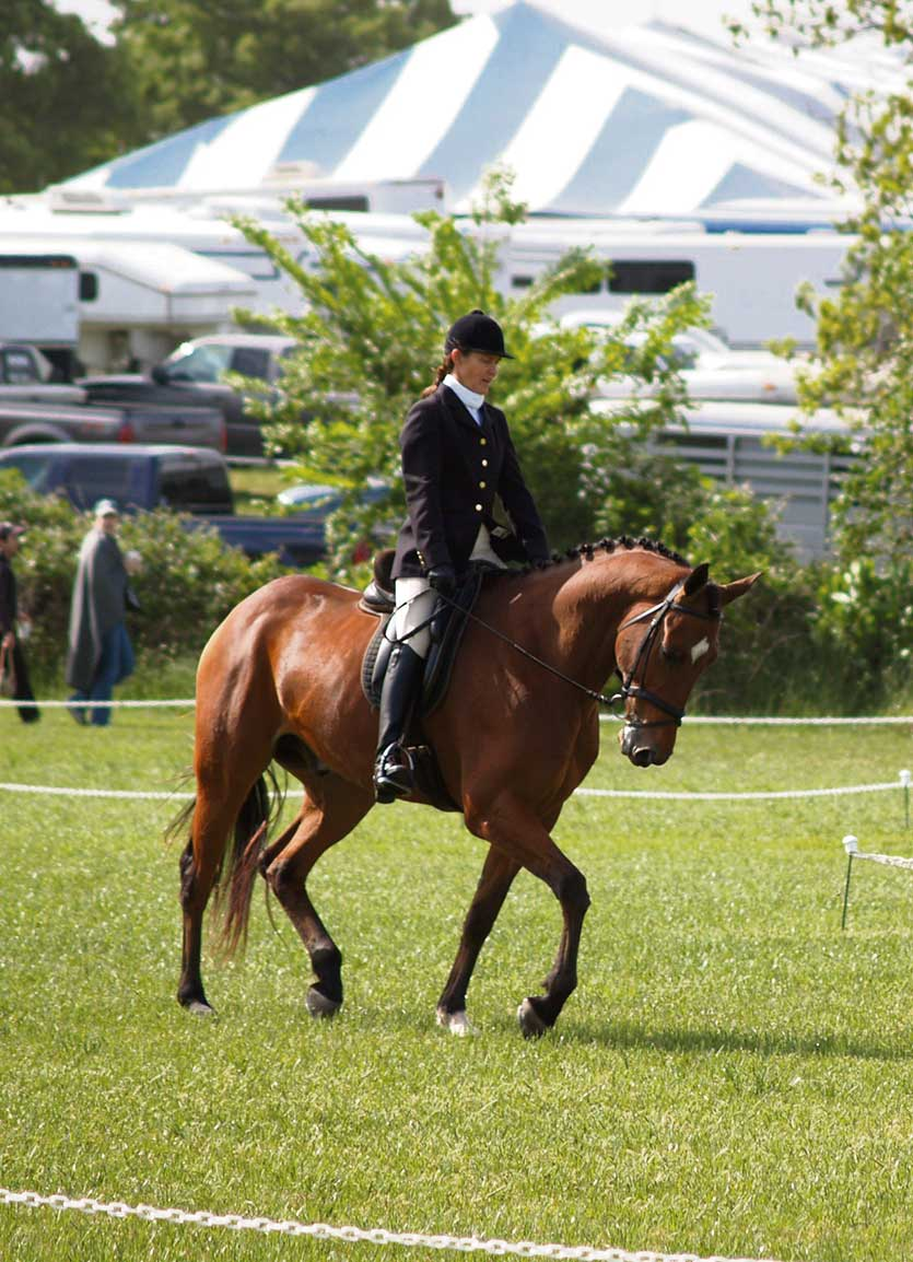 A study claims that equine stress levels are not affected by the sex of the rider