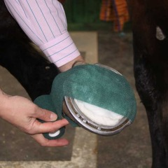 Dealing with a Hoof Abscess with Robinson Animal Healthcare