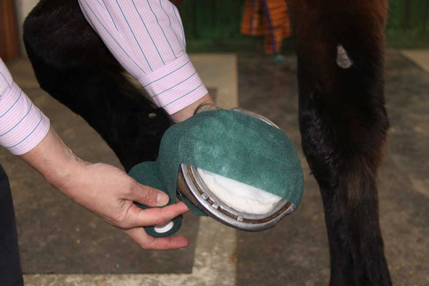 Dealing with a Hoof Abscess with Robinson Animal Healthcare | Equi