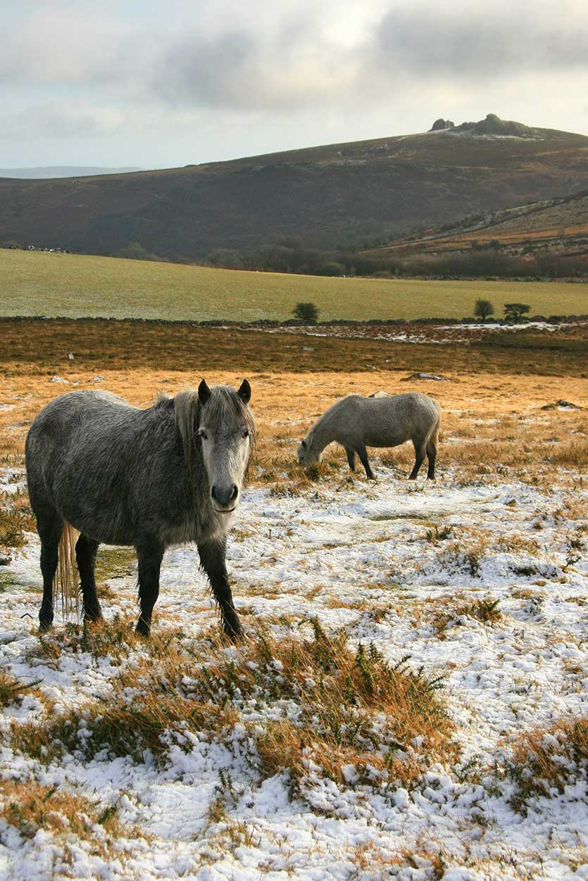 A new database is promised that will help identify the UK's many horses.