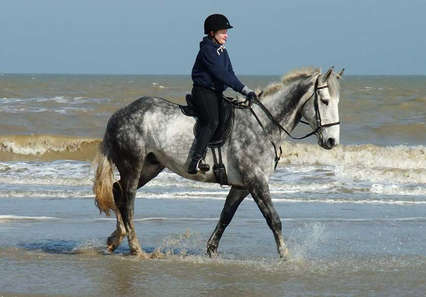showing-beach-riding