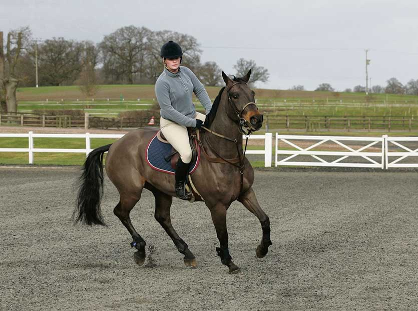 Canter is a key gait for showjumpers