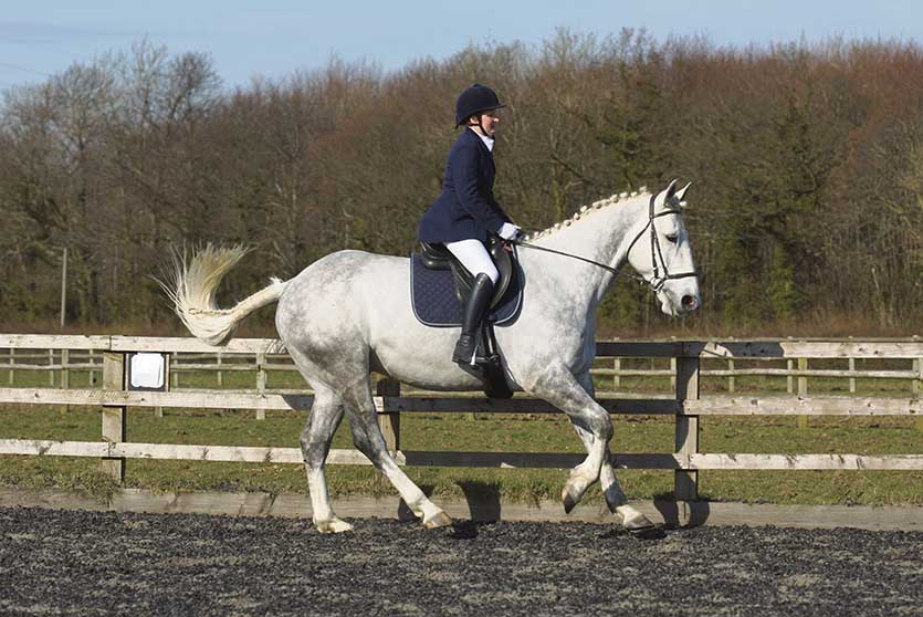Practise canter work this winter to hone your dressage scores