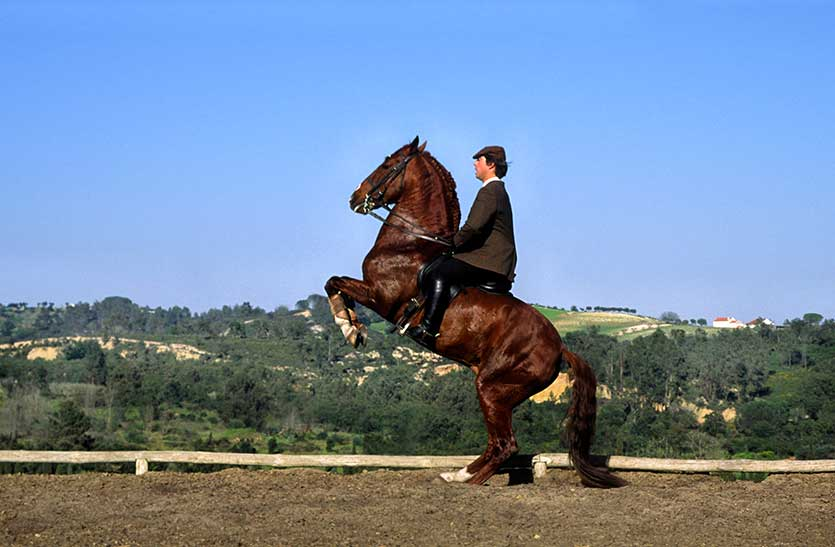 In this picture Jorge rides another ex-bullfighting stallion, in piaffe.