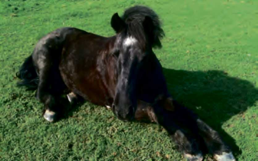 Tips on Caring for Older Horses